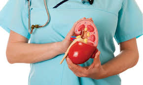 TAKING CARE OF YOUR KIDNEYS THE RIGHT WAY