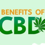 8 Reasons to Hop on the CBD Trend